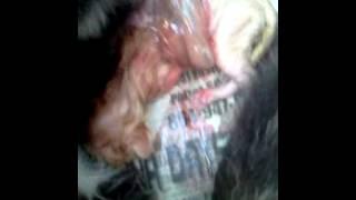 Cat birth on vid