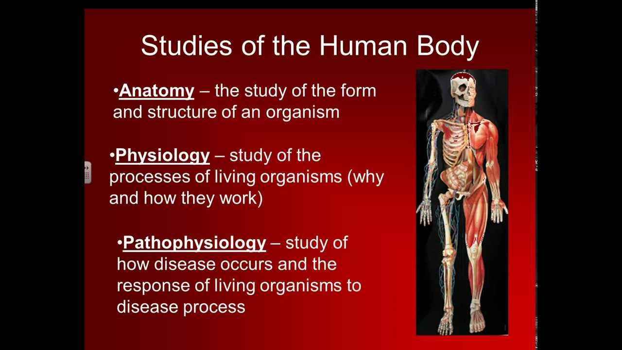 Basic Structure Of The Human Body Youtube