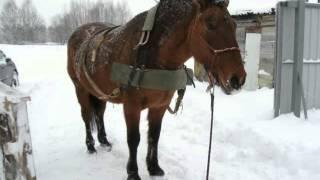 Уборка снега с помощью лошади