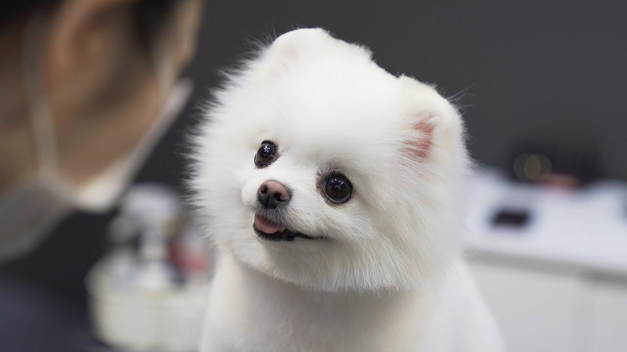 สุนัข น่ารัก