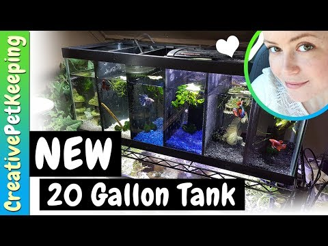 Updating the Fishroom | NEW 20 Gallon Male Betta Divided Tank | Fish Fan Friday