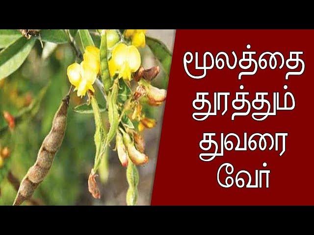 மூலத்தை துரத்தும் துவரை வேர் – Tamil Info