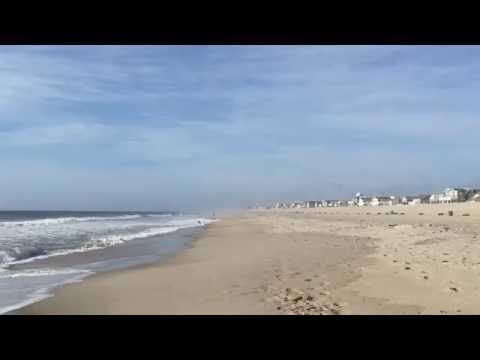 Welsh Springer Spaniel Beach Dog
