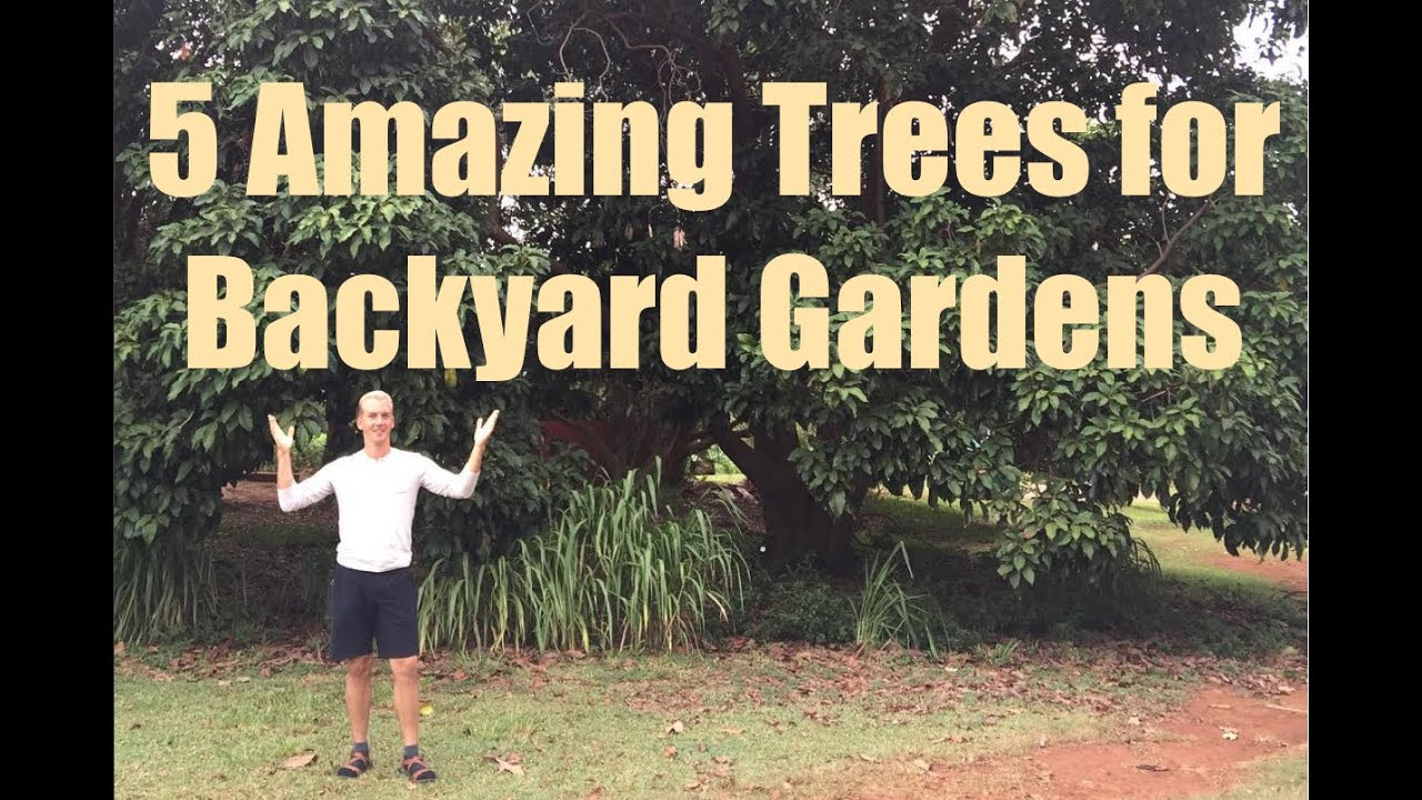 5 Amazing Edible Trees for Backyard Gardening - YouTube