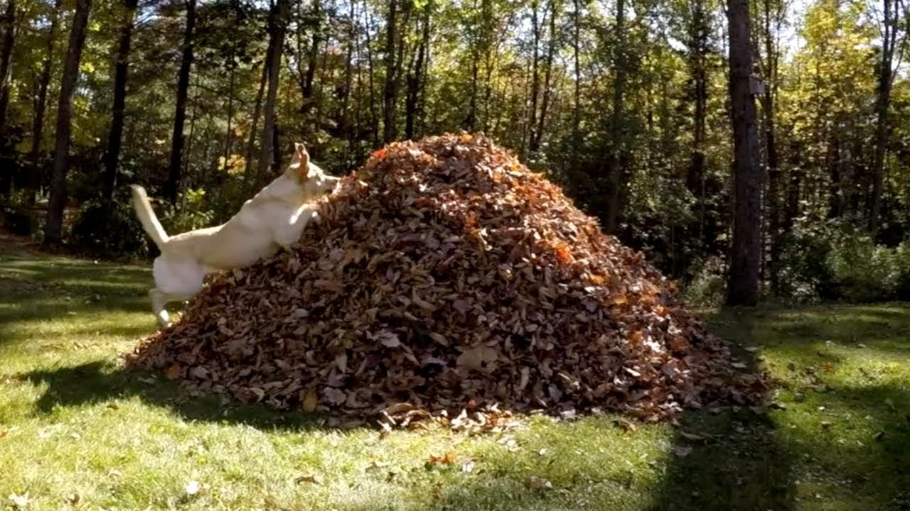 Stella Is Back In The Leaves Youtube