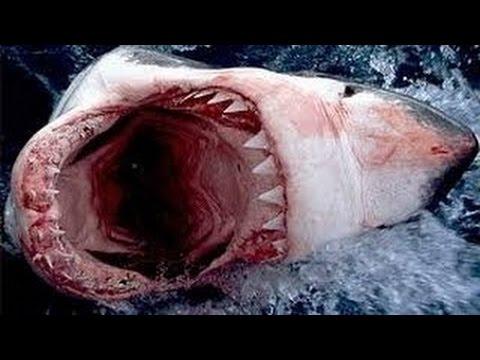 Documentário dublado 2017 - Ataque Animal: O Grande Tubarão Branco Documentário Completo NatGeo from YouTube · Duration:  45 minutes 6 seconds