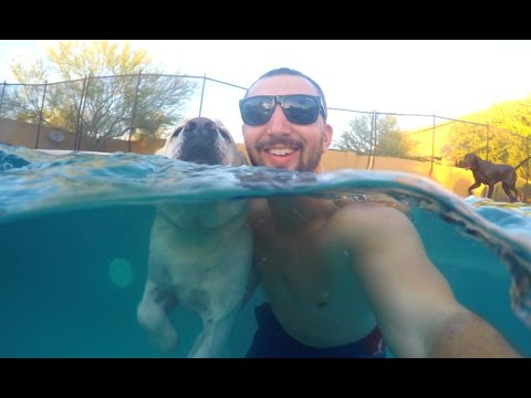 SWIMMING WITH MY DOGS!!