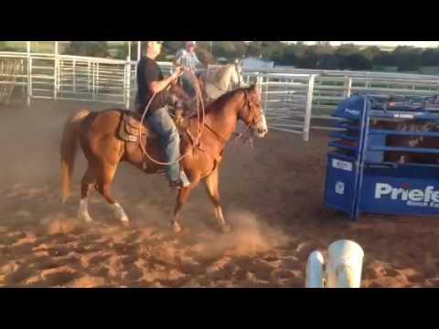 Sorrel head horse