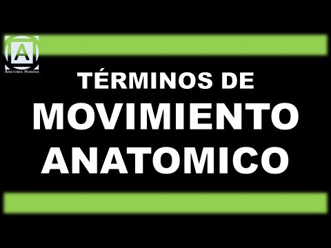TÉRMINOS DE MOVIMIENTO ANATOMICO - YouTube