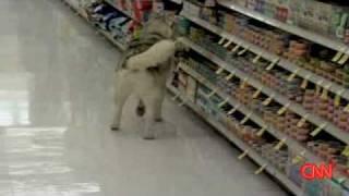 Shoplifting DOG Apologizes ! | Canine Returns To Scene Of Crime | KSL-TV