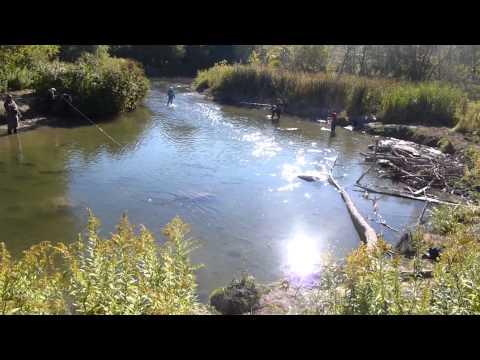 Hot Spot - massive Bowmanville Creek Salmon Run