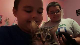 Kitten Update!!! So much cuteness🐱🐱(and sadness)