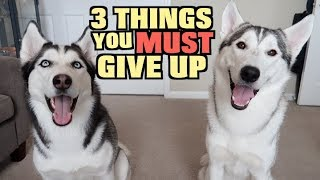 3 Things You MUST GIVE UP If You Want A Siberian Husky...
