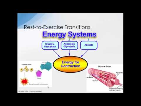 3 Overview anaerobic and aerobic metabolism