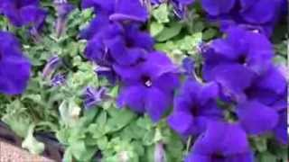 Beautiful flowers-annuals and perennials