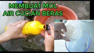 #TIS#CARA GRATIS Buat MOL Leri Subur+Untung Besar!  [How to Make Liquid Fertilizer from Rice Water?]