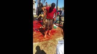 Kurban Bayramı Hasanoğlan 2017