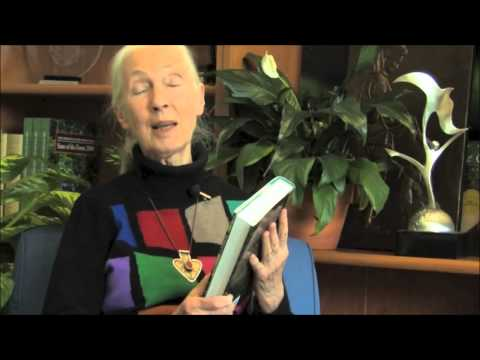 "Jane Goodall Interview On Her New Book ""Seeds of Hope"""