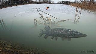 ЖЕРЛИЦЫ! Крупная ЩУКА на Окуня! Зимняя рыбалка 2020