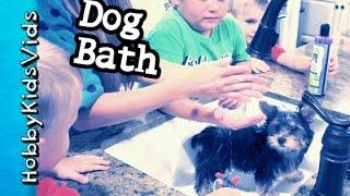 HobbyPuppy Gets a Bath! Littlest Pet Shop Surprise + Pet Shampoo Kelco Dog Wash  HobbyKidsVids