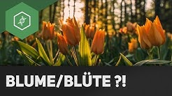 Blume oder Blüte: Was ist der Unterschied?! ● Gehe auf SIMPLECLUB.DE/GO & werde #EinserSchüler