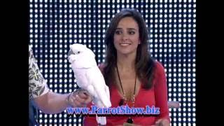 Parrot Show + Guinness World Record 2009