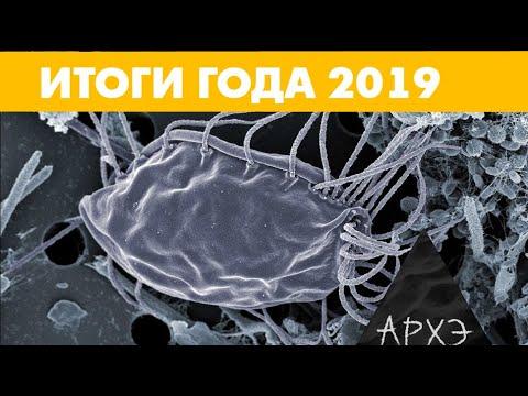 """Александр Марков: """"Открытия в эволюции. Итоги 2019 года"""""""