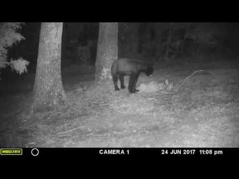 Bear sightings in Kimberly, Alabama