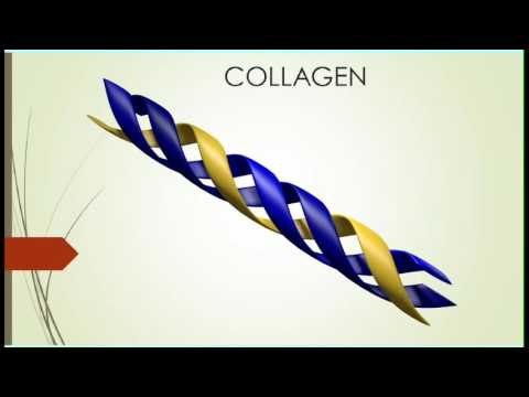 TRIPLE HELICES OF COLLAGEN