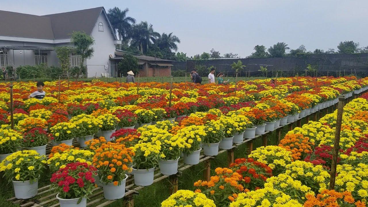 Toàn cảnh thủ phủ hoa Miền Tây những ngày cận Tết Canh Tý 2020 Làng Hoa Tết Sa Đéc
