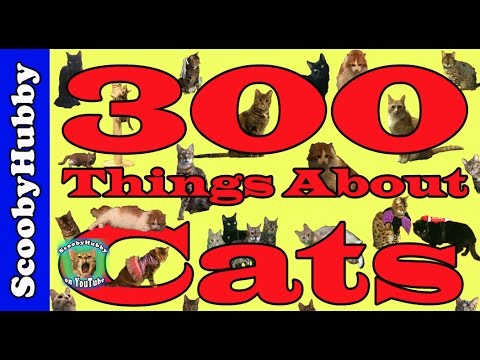 300-things-about-cats----cat-clips-#300