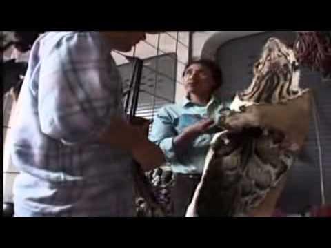 illigal wild life trade (market in tachilek, myanmar)