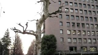 United Nations University, Shibuya Prefecture, Tokyo, Japan
