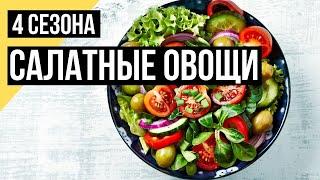 Четыре сезона. Малоизвестные салатные овощи