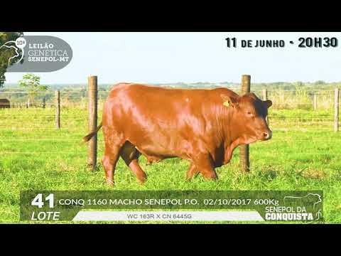 LOTE 41   CONQ 1160