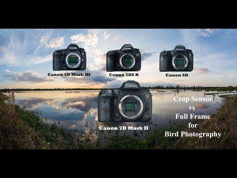 Crop Sensor vs Full Frame for Bird Photography