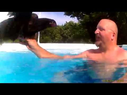 Guy can't contain himself over the fact that chickens float
