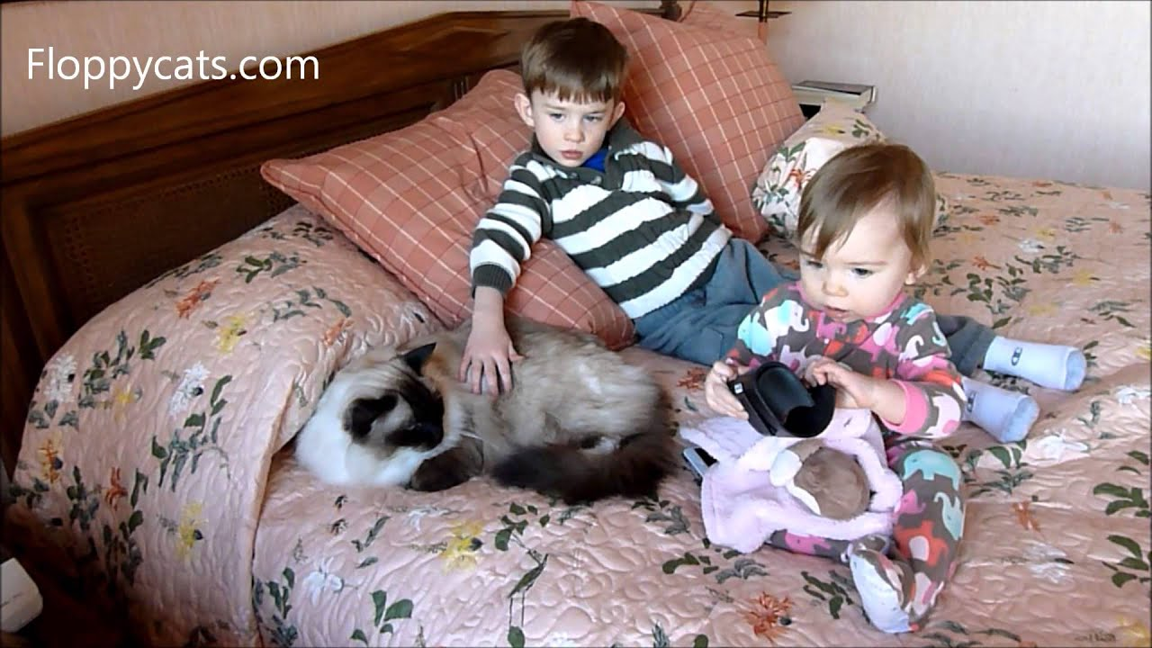 ragdoll cats and kids ragdoll cat caymus with small children marshall and lucy floppycats - Small Kids Picture