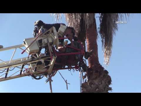 Rancho Bernardo: Tree Trimmer Rescue 07272017