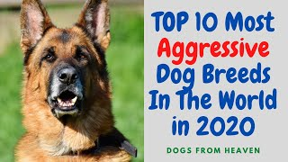 TOP 10 Most Aggressive Dog Breeds In The World in 2020