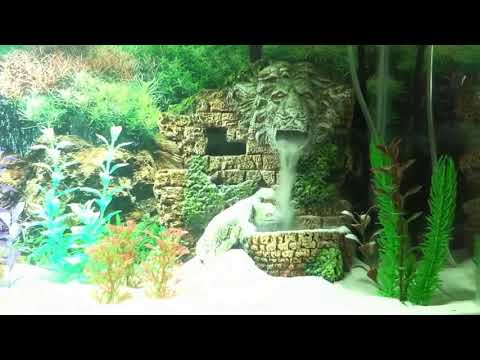 Underwater Waterfall, white sand Betta tank!! :D