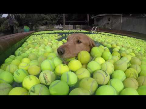 Tennis Balls For Everything