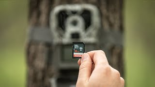 Avoid These 5 SD Card Trail Camera Mistakes