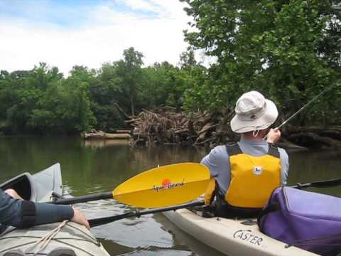 Kayaking fishing in the catawba river youtube for Catawba river fishing