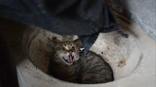 農村小夥收養超兇小野貓5個月了妳們覺得它有變化嗎