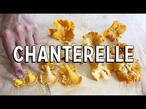Chanterelle Mushroom - How To Find | How To Cook