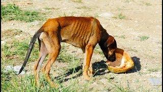 Rescata Me, Punta Cana Dog Rescue