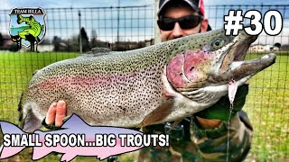 Small Spoon...Big Trout - Trote Giganti a Spinning