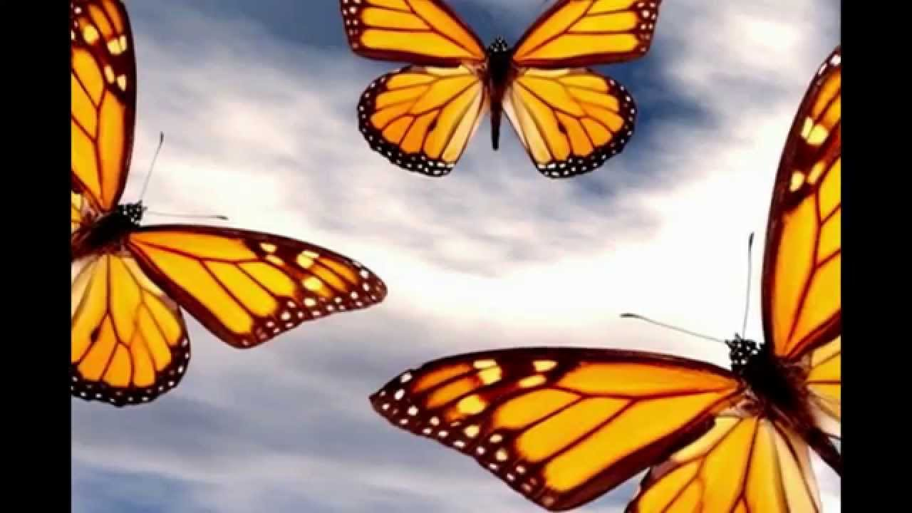 Attract Butterflies To Your Garden EASILY! ~ How To Grow Asclepias Plants