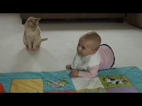 Baby JM chatting to Burmese cat